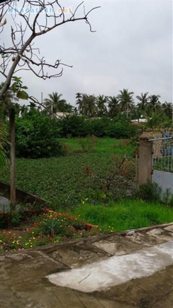 Cần bán 4500m2 đất trồng cây lâu năm tại xã Tân Thới Nhì, Hóc Môn.