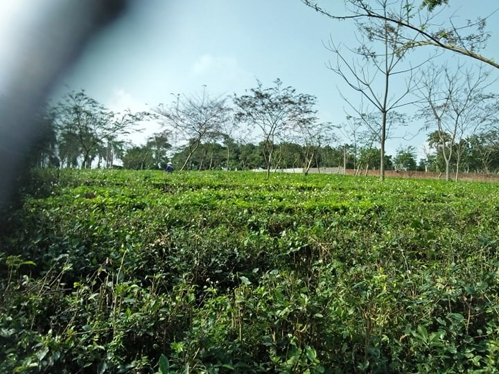Cần bán đất làm nhà ở khu nghỉ dưỡng, trang trại nhà vườn sinh thái tại thôn Long Phú, Hòa