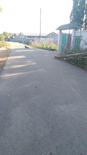 Gia đình kẹt tiền cần bán gấp đất vườn Cầu Vượt Củ Chi, cách QL 22 - 3km, giá chỉ 838 triệu