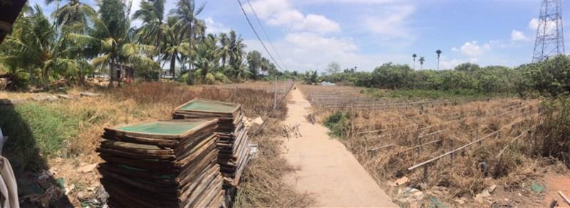 Chính chủ bán mảnh đất tại huyện Long Phú, Sóc Trăng, 6,9 tỷ, 0984272737